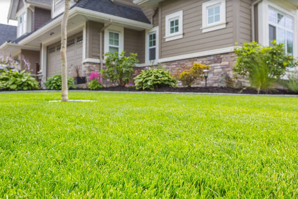 Residential Lawn Care Service In Yourcity